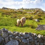 Voyage scolaire Galway